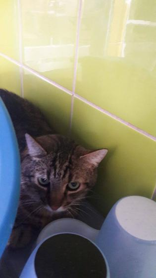 Adopter POINTILLE, chat male de 9 ans