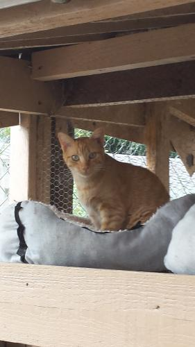 Adopter ROUKY, chat male de 4 ans
