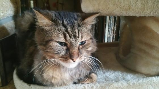 Adopter AMOUCHE, chat male de 8 ans