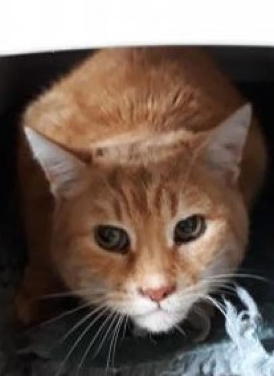 Adopter RASTA, chat europeen male de 8 ans