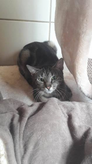Adopter MANY, chat europeen femelle de 2 ans
