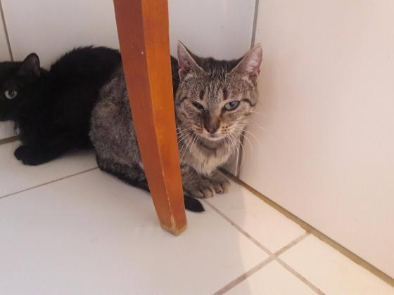 Adopter LUCILE, chat femelle de 4 ans