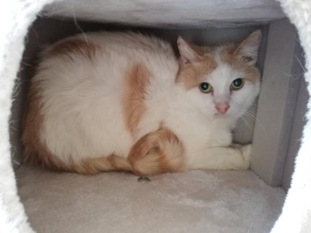Adopter IVAR, chat male de 6 ans