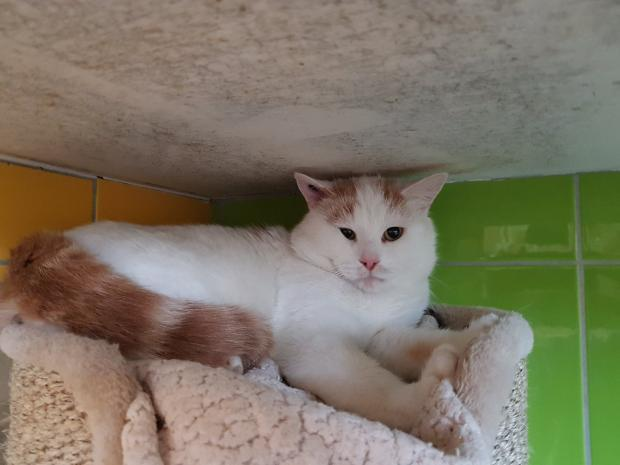 Adopter NUNKY, chat male de 5 ans