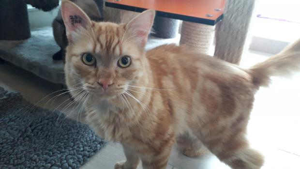 Adopter ALPHA, chat male de 4 ans