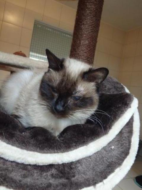 Adopter ANGIE, chat femelle de 12 ans