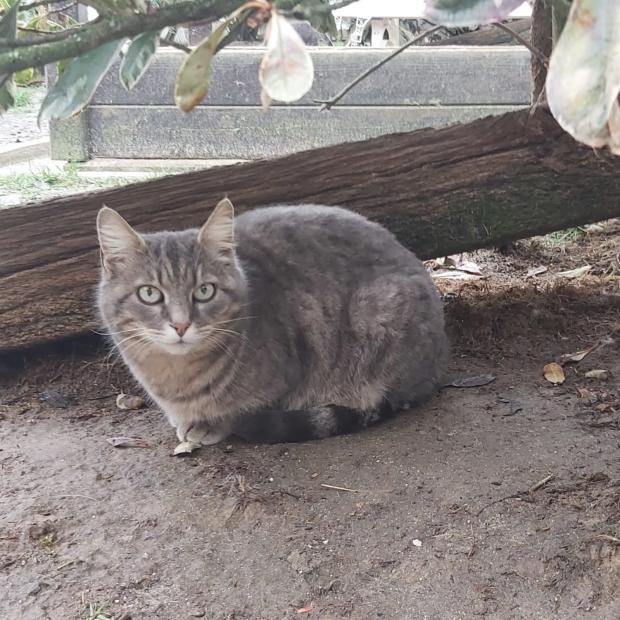Adopter BABYDOLL, chat femelle de 11 ans