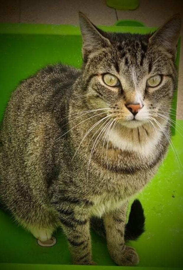 Adopter BAGHEERA, chat male de 5 ans