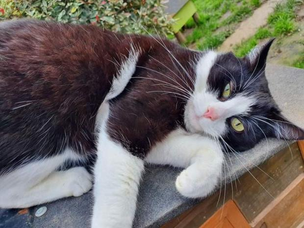 Adopter BISHOP, chat europeen male de 3 ans
