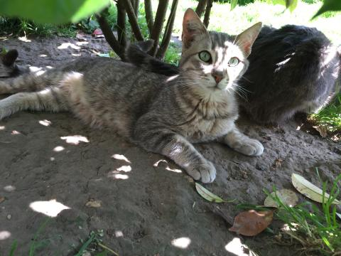 Adopter BOSCO, chat male de 6 ans