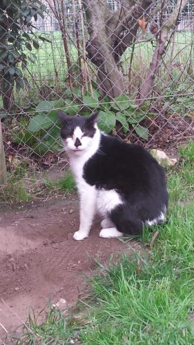 Adopter BEBE, chat europeen male de 8 ans