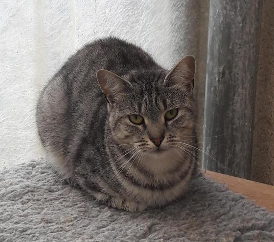 Adopter BUSTER, chat male de 5 ans