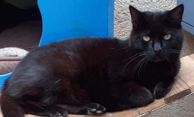 Adopter EBENE, chat male de 12 ans