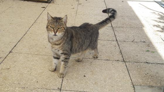 Adopter ENGY, chat femelle de 7 ans