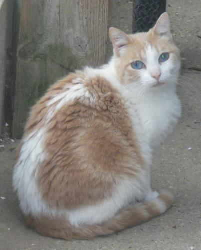 Adopter FENOUIL, chat male de 9 ans