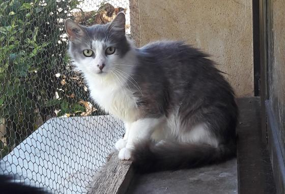 Adopter FAONA, chat femelle de 4 ans