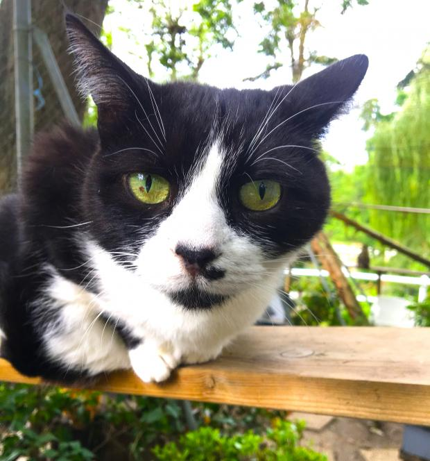 Adopter FILOU, chat male de 9 ans
