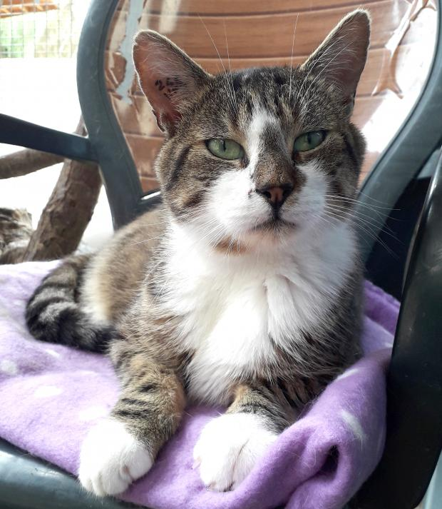 Adopter FOX, chat male de 5 ans