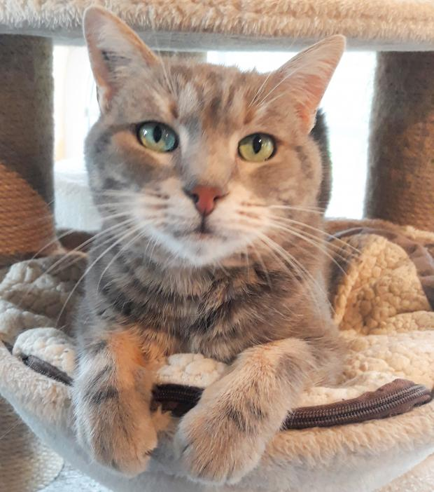 Adopter GRIFFIN, chat male de 9 ans