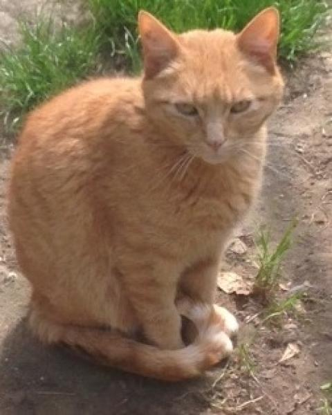 Adopter DOLLY, chat male de 9 ans
