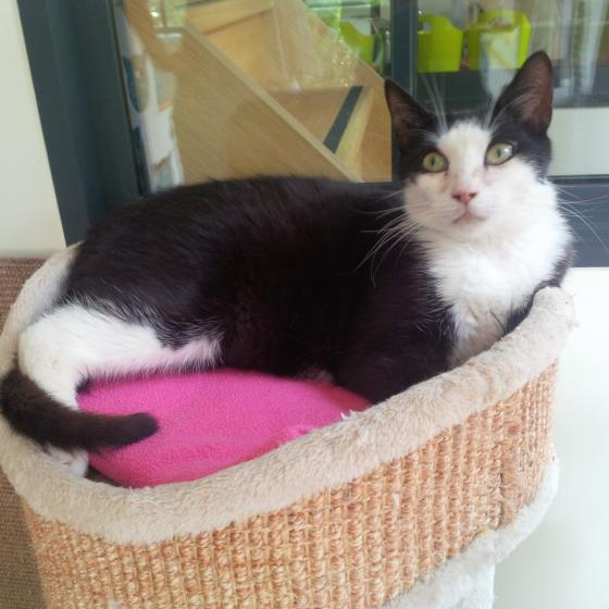 Adopter ISIS, chat male de 1 an