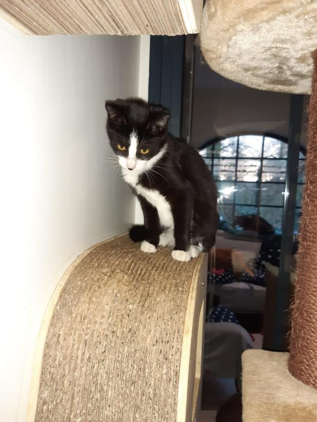 Adopter passion, chat femelle de 6 mois