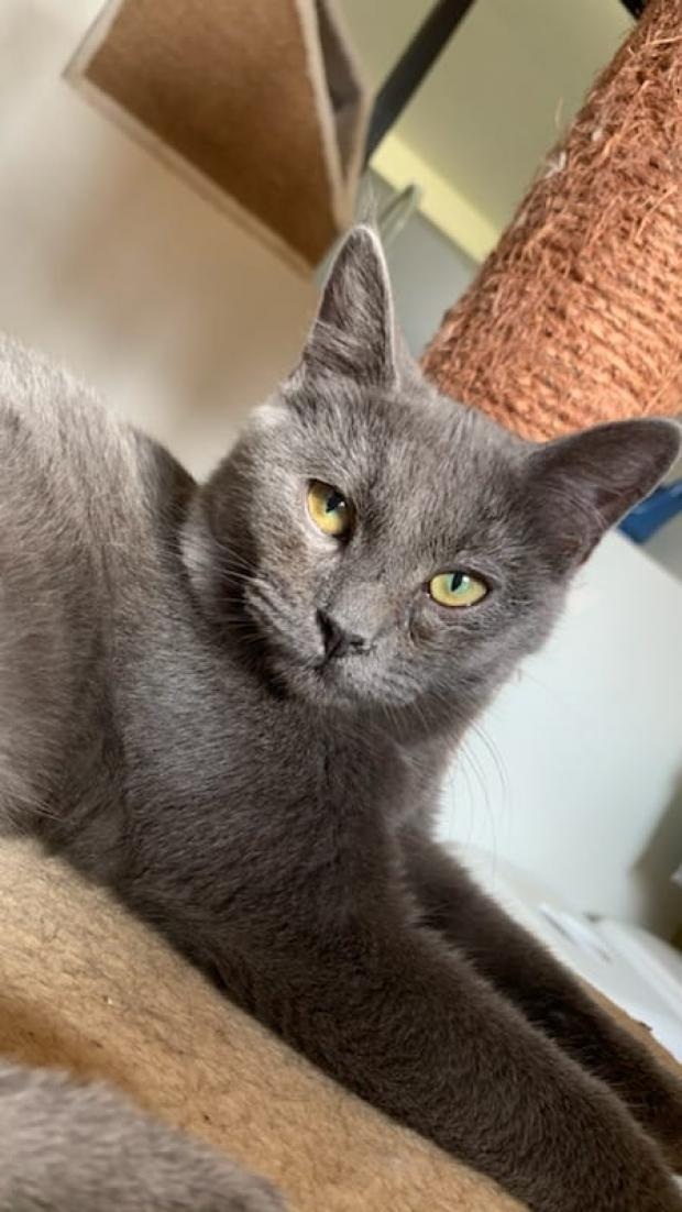 Adopter ritchie, chat male de 6 mois