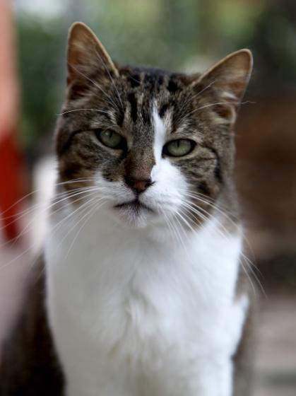 Adopter SAMSUNG, chat europeen male de 7 ans