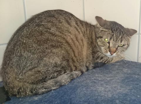 Adopter IWAN, chat male de 9 ans
