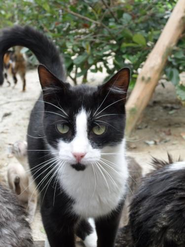 Adopter ILICO, chat europeen male de 2 ans