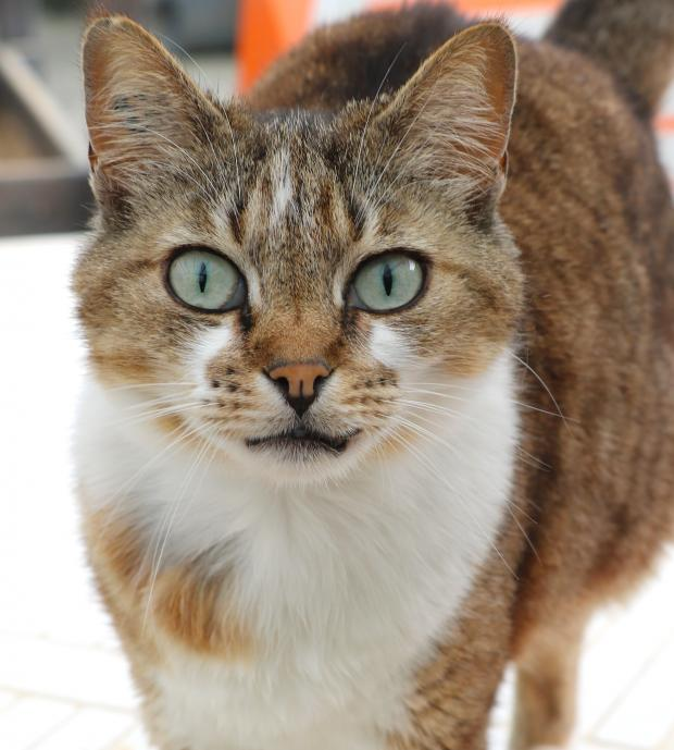 Adopter KATHY, chat femelle de 8 ans