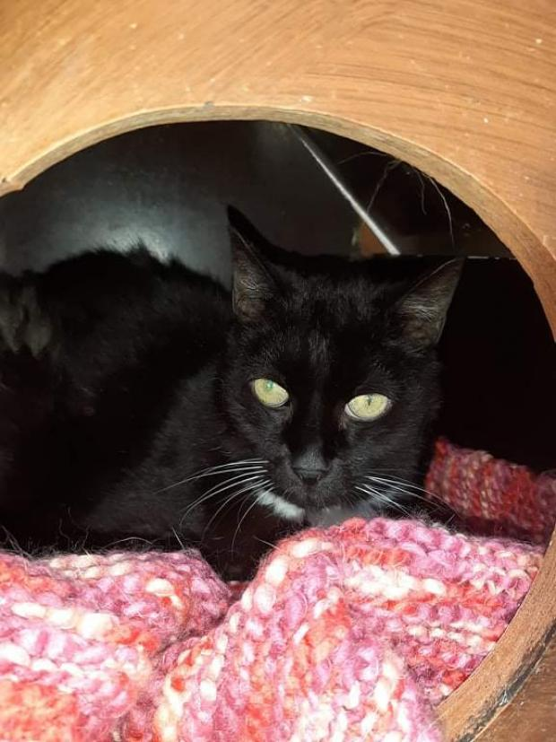 Adopter LEO, chat male de 15 ans
