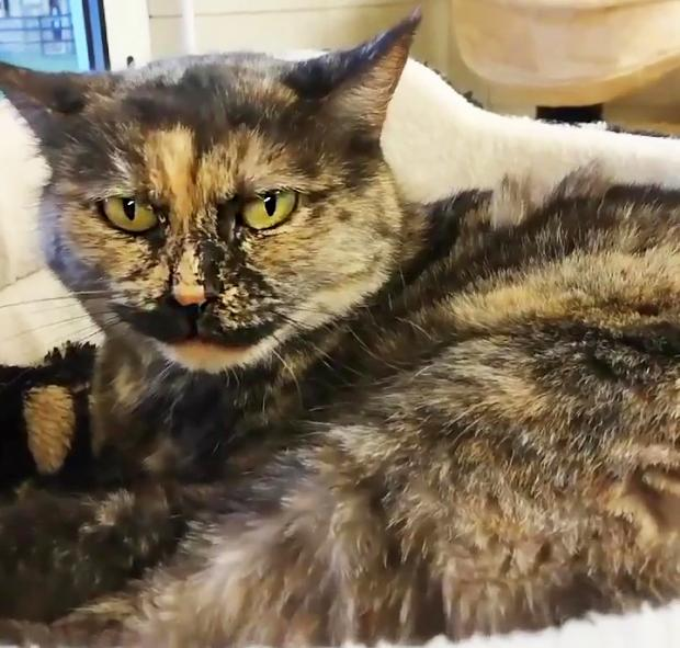 Adopter LILI, chat femelle de 9 ans