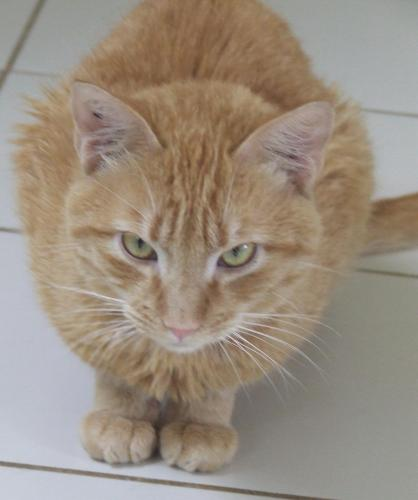 Adopter MIRACLE, chat male de 5 ans