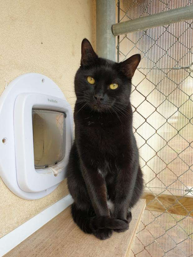 Adopter MOE, chat male de 3 ans