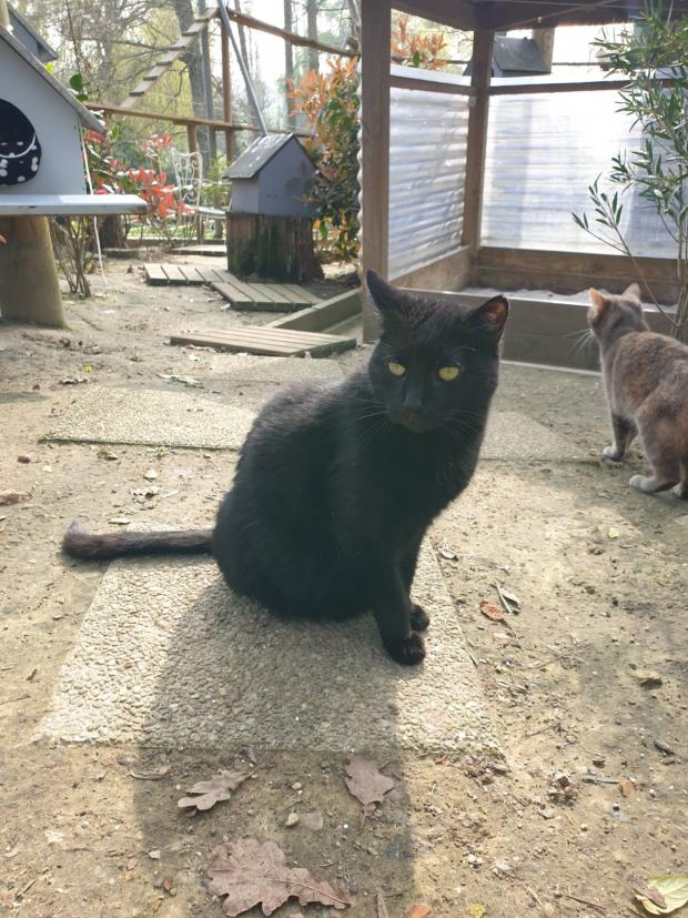 Adopter MUSCAT, chat male de 6 ans