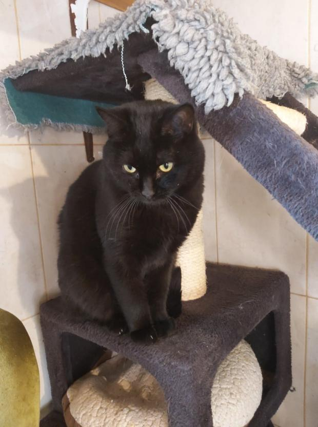 Adopter MARLEY, chat femelle de 7 ans