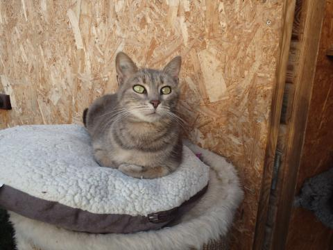 Adopter MILIANA, chat europeen femelle de 5 ans