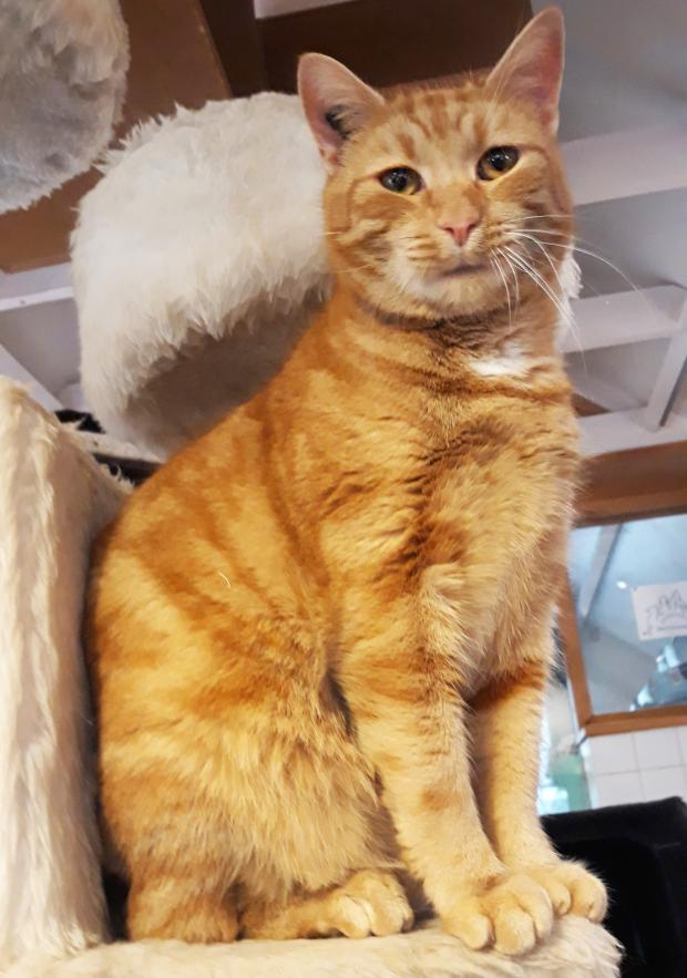 Adopter MOUTE, chat male de 5 ans