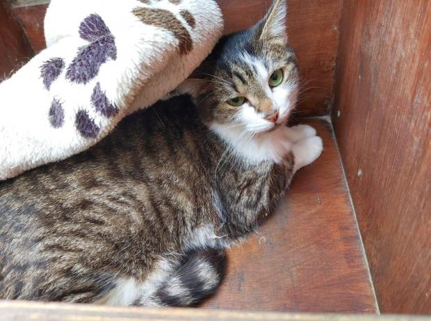 Adopter Nicolas, chat male de 5 ans