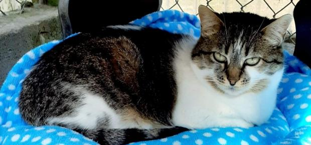 Adopter OASIS, chat femelle de 4 ans