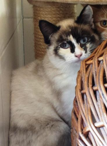 Adopter OGGY, chat femelle de 3 ans