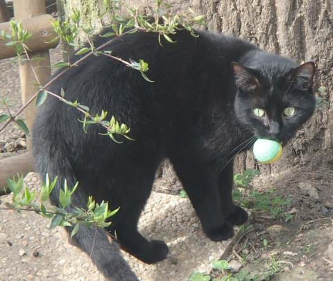 Adopter ZADIG, chat male de 5 ans