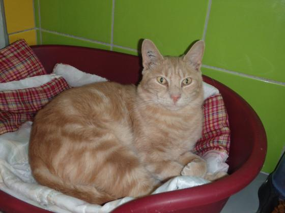 Adopter SOLEIL, chat male de 2 ans