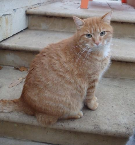 Adopter GARFY, chat male de 4 ans