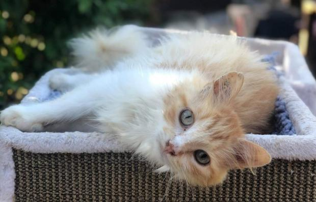 Adopter PLOE, chat male de 4 ans