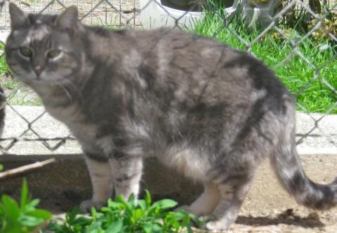 Adopter PULCO, chat male de 9 ans