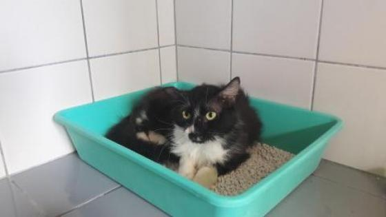 Adopter Pépino, chat europeen male de 7 ans