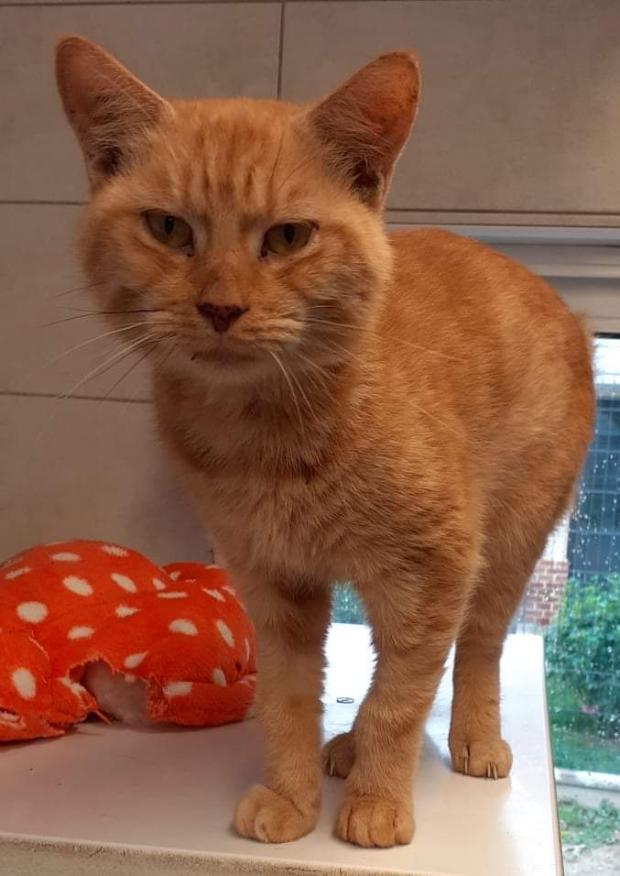 Adopter PESTO, chat male de 4 ans