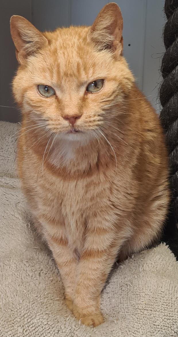 Adopter RAMY ALIAS RAMSES, chat male de 15 ans